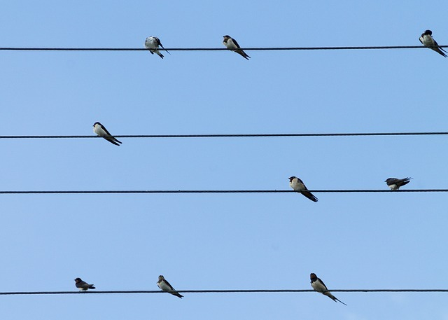 Birds resting on telephone lines against a blue sky.