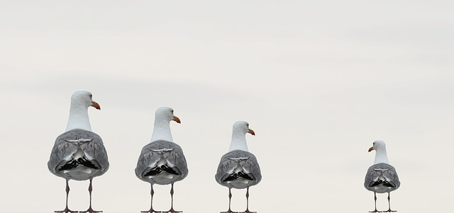 Three gulls staring down at the smallest one